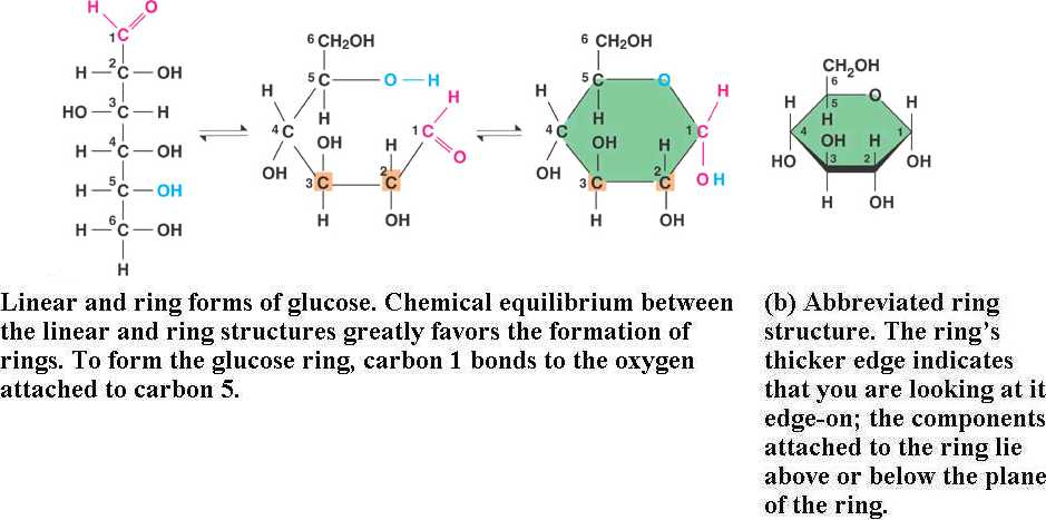 chapter 5 the structure and function of macromolecules