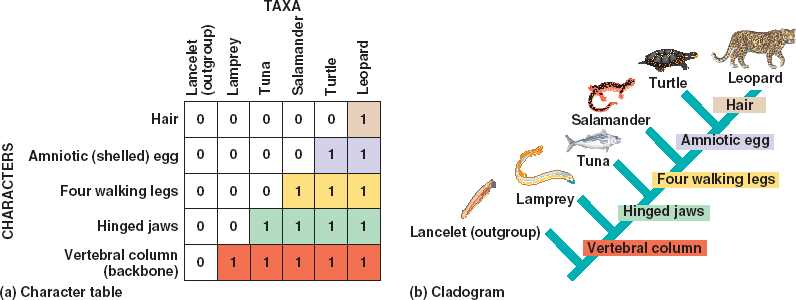 how to draw a cladogram from a table