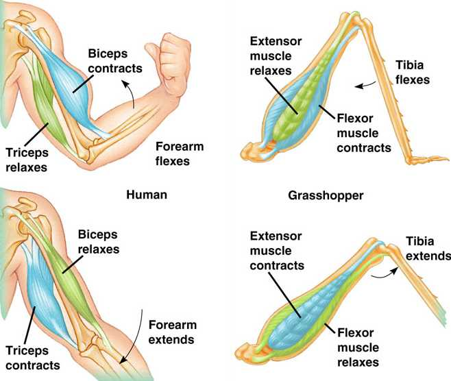 Muscle Movement 50